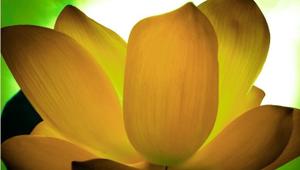 Yoga Sutras | Chapter 3 - Vibhuti Pada
