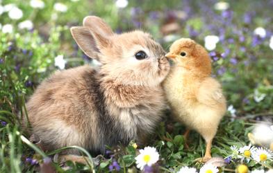 <p>Vi synger om dyr</p>