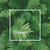 Bloom Meditation