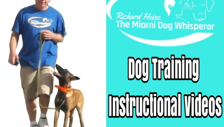 Dog Training Instructional Videos