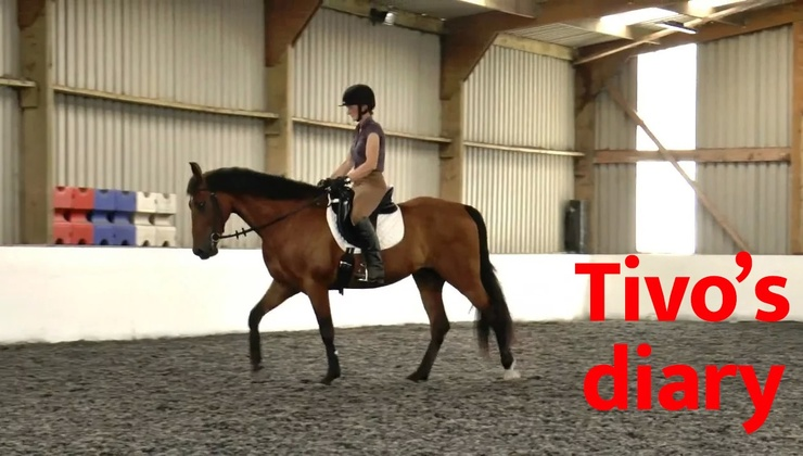 Project horse series - Tivo's diary