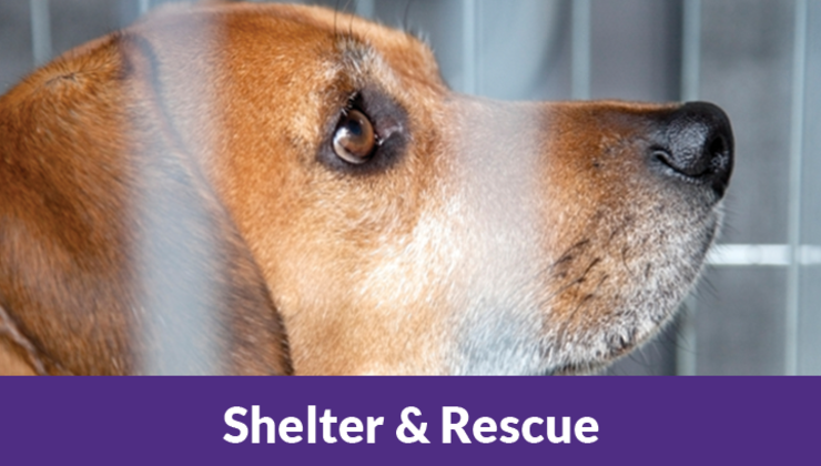 Shelter & Rescue