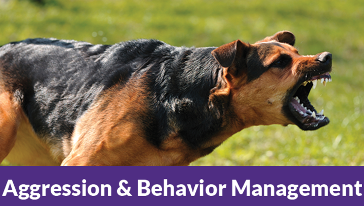 Aggression & Behavior Management