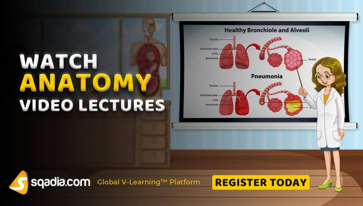 Anatomy Course Video Lectures | Medical | V-Learning | sqadia com