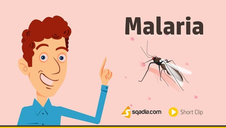 Malaria (SQT)