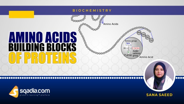 Amino Acids Building Blocks of Proteins