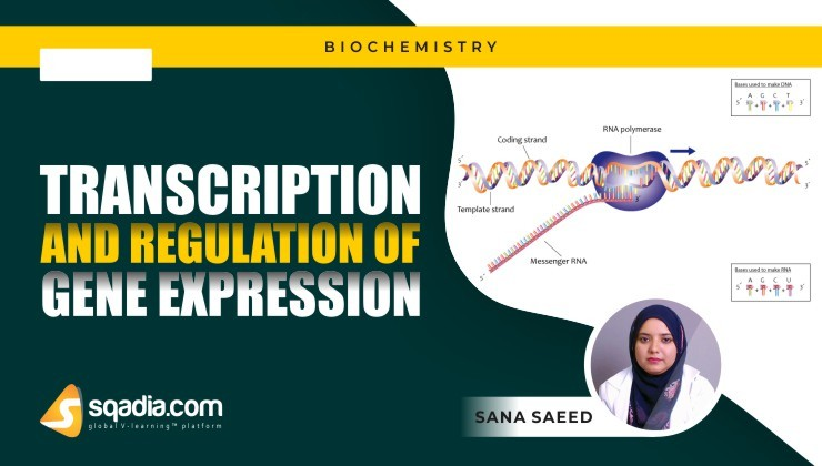 Transcription and Regulation of Gene Expression