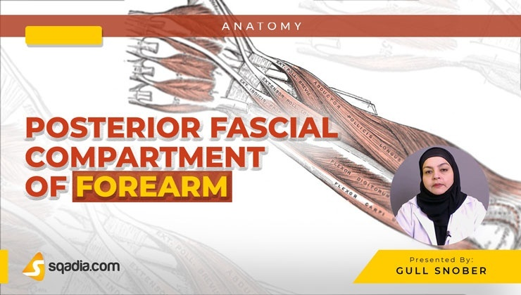 Posterior Fascial Compartment of Forearm