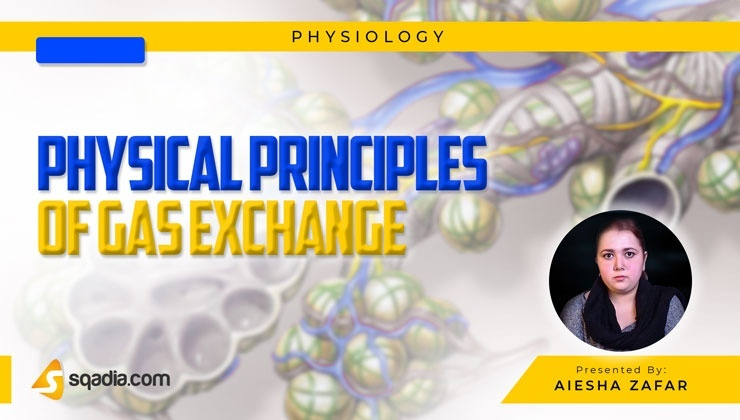 Physical Principles of Gas Exchange