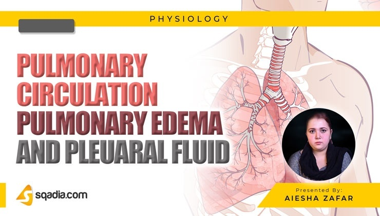 Pulmonary Circulation, Pulmonary Edema and Pleural Fluid