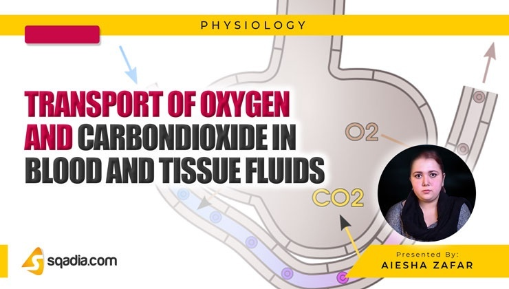 Transport of Oxygen and Carbondioxide in Blood and Tissue Fluids