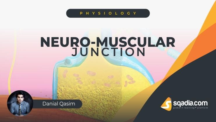 Neuro-muscular Junction