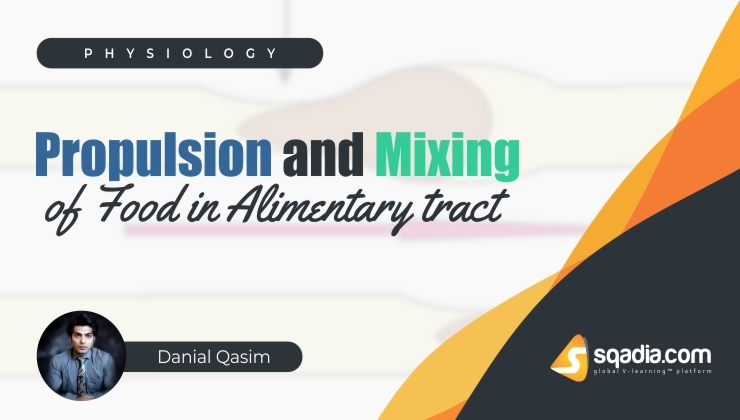 Propulsion and Mixing of Food in Alimentary Tract