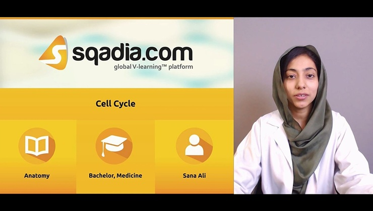 Cell Cycle (SA)