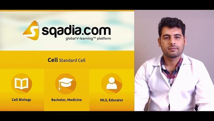Standard Cell (BM)