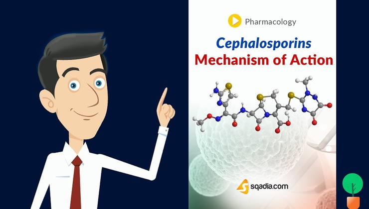 Cephalosporins - Mechanism of Action