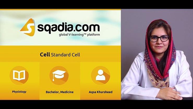 Standard Cell (KA)