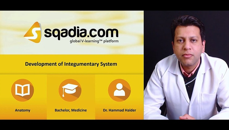 Big c2eqwt1eqlax6paonf8g 180111 s0 haider hammad development of integumentary system intro