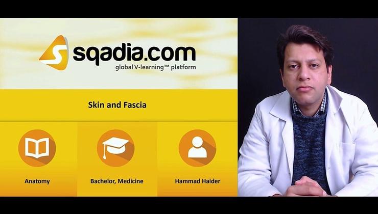 Skin and Fascia