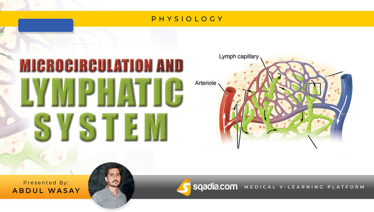 Microcirculation and Lymphatic System