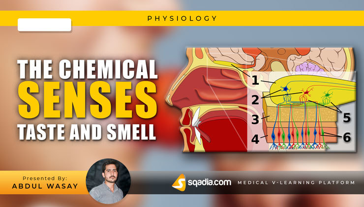 The Chemical Senses: Taste and Smell