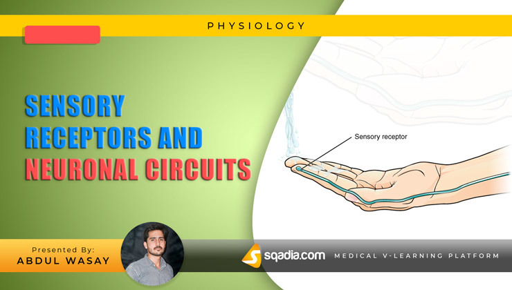 Sensory Receptors and Neuronal Circuits