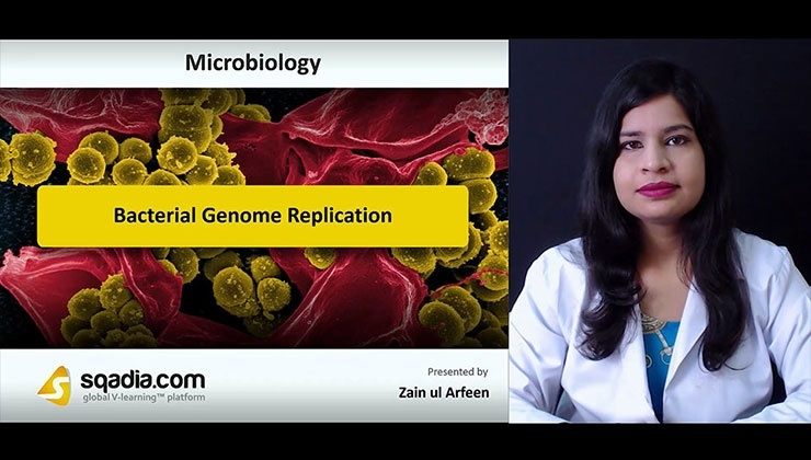 Bacterial Genome Replication