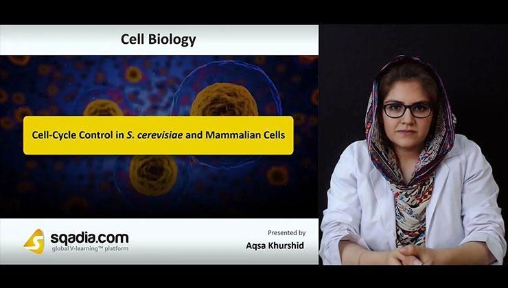 Cell-Cycle Control in S. cerevisiae and Mammalian Cells