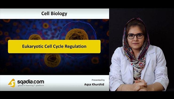 Eukaryotic Cell Cycle Regulation