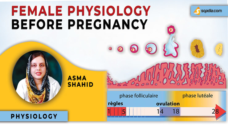 Female Physiology Before Pregnancy