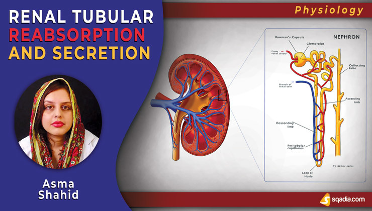 Renal Tubular Reabsorption and Secretion