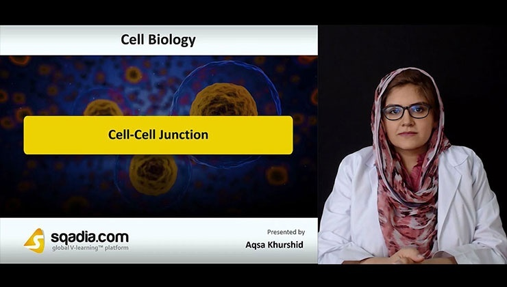 Cell-Cell Junction