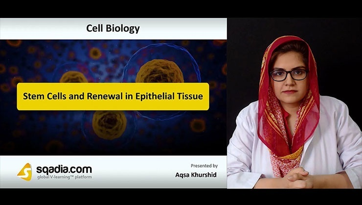 Stem Cells and Renewal in Epithelial Tissue