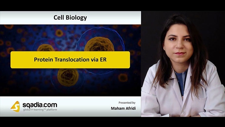 Protein Translocation via ER