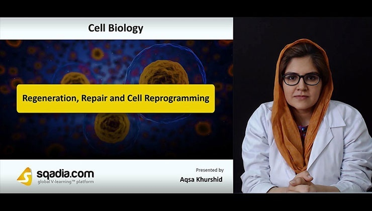 Regeneration, Repair and Cell Reprogramming