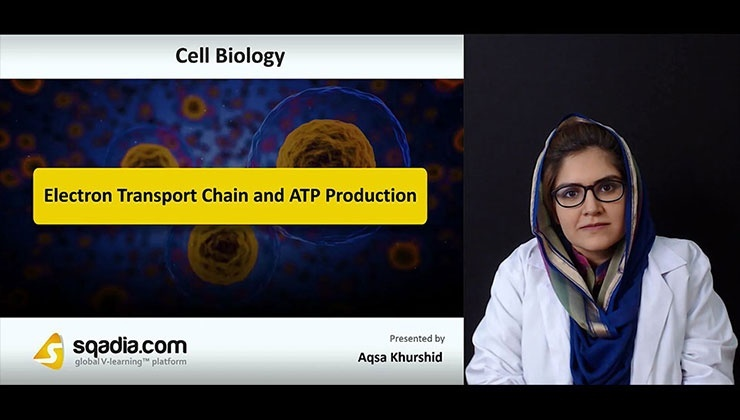 Electron Transport Chain and ATP Production