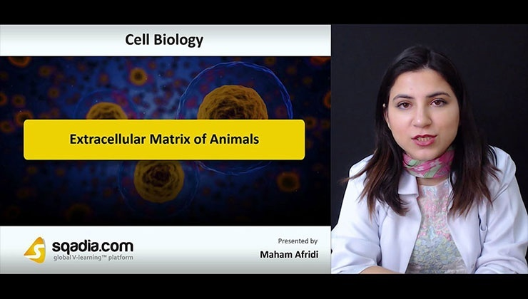 Extracellular Matrix of Animals