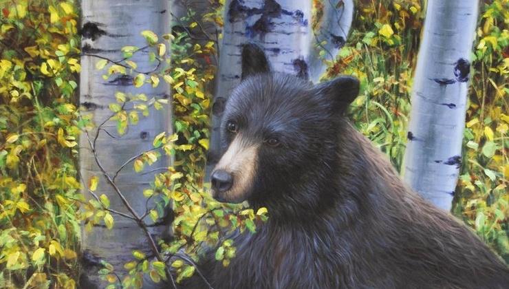 Black Bears in Aspen