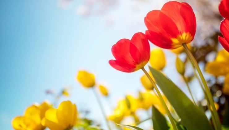 Blog | Top 5 Tips for Spring Cleaning
