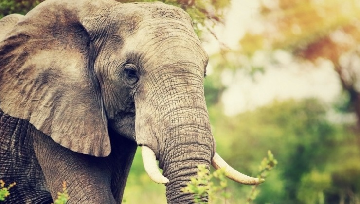 Blog | Ground Down Like An Elephant