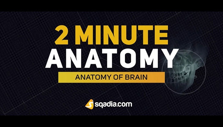 2-Minutes Anatomy: Anatomy of Brain