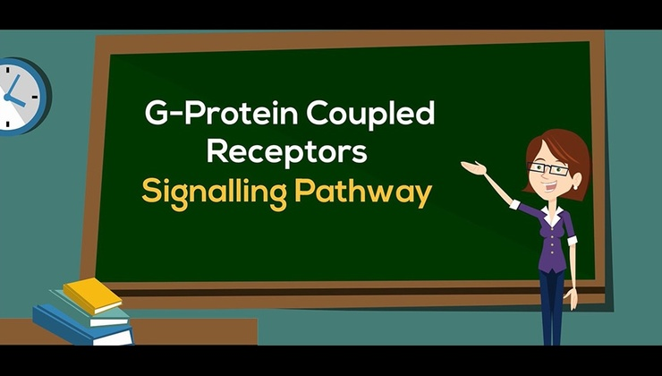 G-Protein Coupled Receptors Signalling Pathways