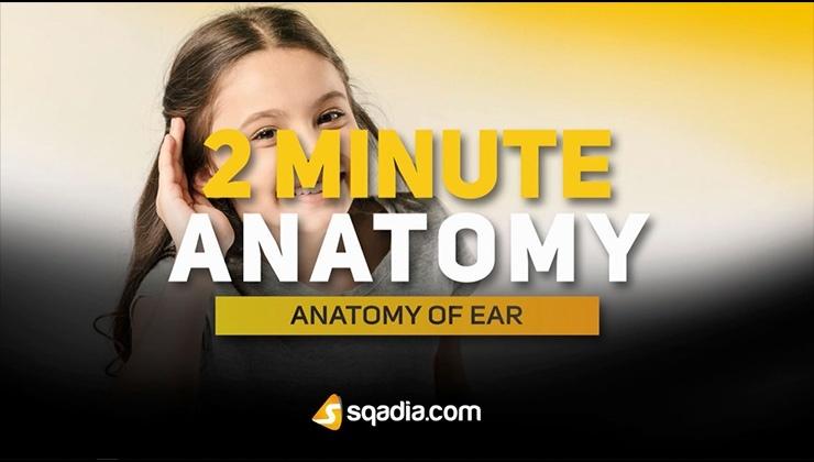 2-Minute Anatomy: Anatomy of Ear