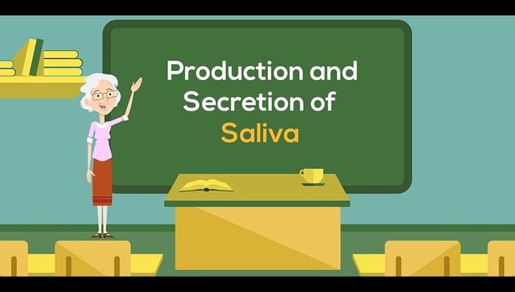 Production and Secretion of Saliva