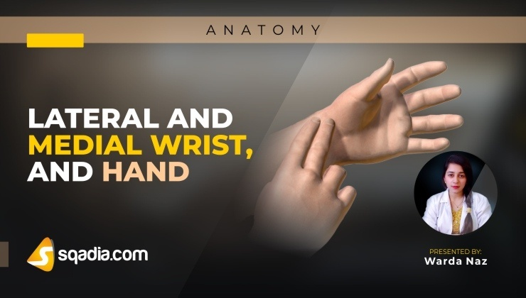 Lateral and Medial Wrist, and Hand