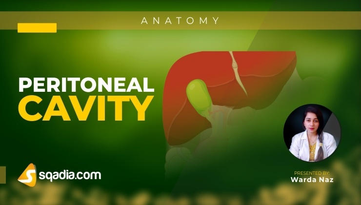 Peritoneal Cavity