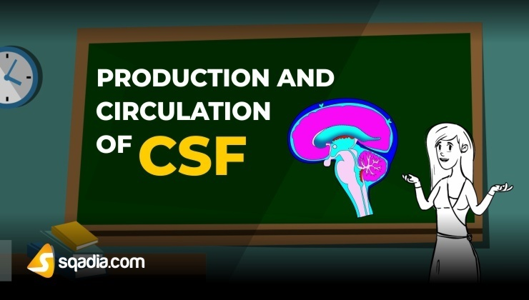 Production and Circulation of CSF