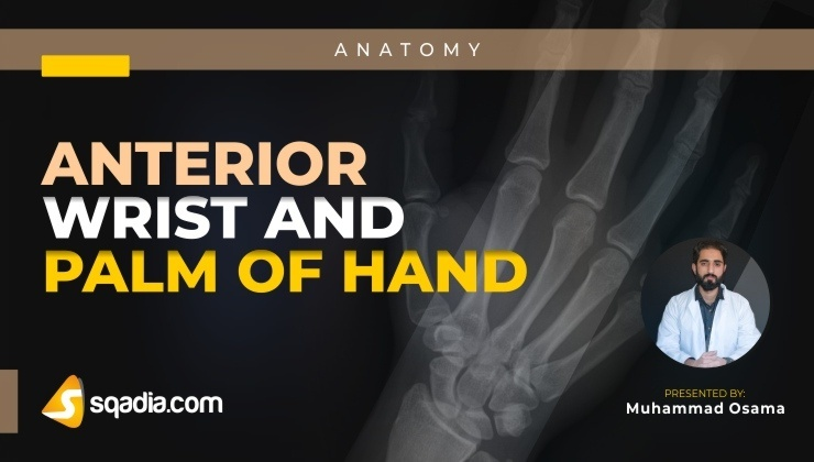 Anterior Wrist and Palm of Hand