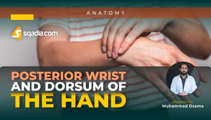 Posterior Wrist and Dorsum of the Hand