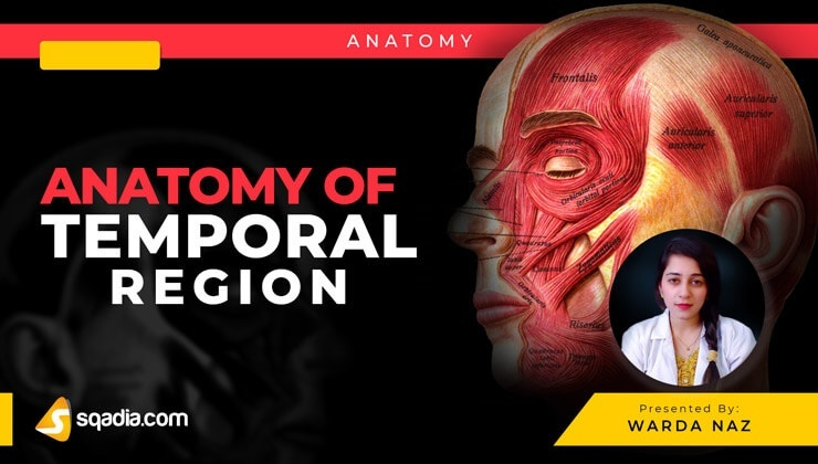 Anatomy of Temporal Region